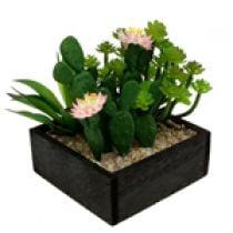 Cactus e succulente