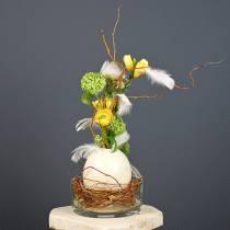 Uovo di struzzo natura soffiato decorazione vuota
