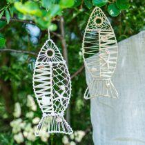 Decorazione pesce marittimo con vimini e conchiglie, gancio decorativo a forma di pesce natura 38cm