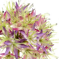 Allium viola chiaro L76cm