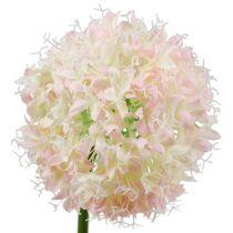 Allium rosa crema Ø15cm L70cm