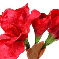 Amaryllis rosso scuro 72,5 cm