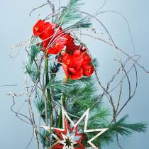 Amaryllis rosso 75 cm