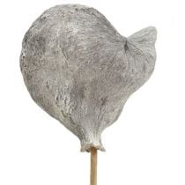 Badam su un bastone sbiancato 12 cm L55 cm 23 pezzi