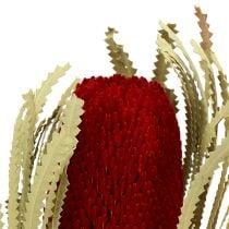 Banksia Hookerana rosso 7 pezzi