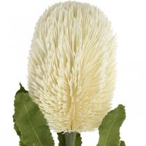 Artificial Flower Banksia White Cream Artificial Exotics 64cm
