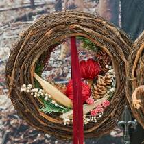 Banksia Baxterii rosso 8 pezzi