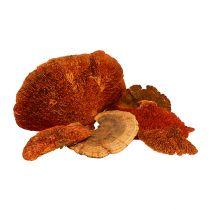 Spugna albero arancione 1kg