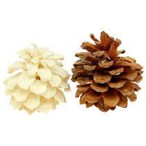 Pigne di pino mugo, piccole, sbiancate 3,5-5 cm 1kg