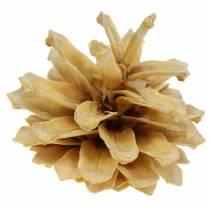 Pigna mugo Pinus mugo crema 2-5cm 1kg