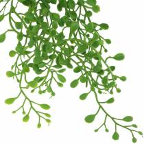 Appendiabiti Mühlenbeckia verde 95 cm