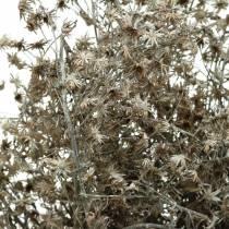 Ramo di fiori selvatici fiorito secco lavato bianco 60 cm 100 g