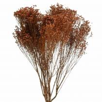 Fiori secchi Ginestra Bloom Brown 170g