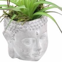 Testa di Buddha per piantare cemento grigio, lavato bianco Ø8 H8cm