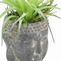 Testa di Buddha per piantare cemento aspetto antico nero Ø8 H8cm