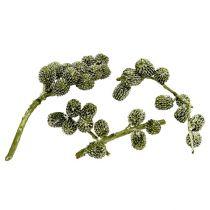 Coni Casurina verde, cerato 110g