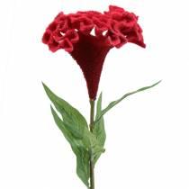 Celosia cristata Hahnenkamm Red 72cm