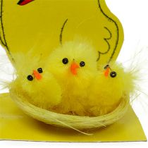 Pulcini in ciniglia Nest Nest Ø 5,5cm 3 pezzi