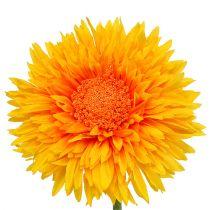Crisantemo Teddy 63cm giallo dorato