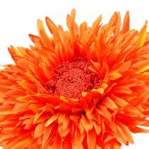 Crisantemo Teddy 63cm Arancione