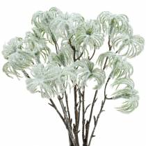Clematide verde nevicato 43cm 3 pezzi