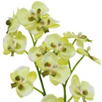 Mini orchidea verde chiaro con globo 30 cm