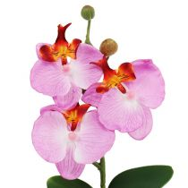 Orchidea decò in vaso rosa H29cm