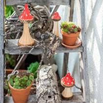 Funghi decorativi in legno rosso, naturale 13,5 cm - 19 cm 3 pezzi
