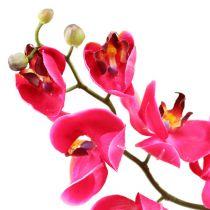 Orchidea Deco in fucsia 77cm