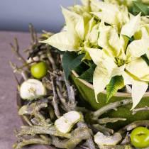Cespuglio di curry Decoast lavato verde 500g