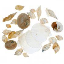 Gusci di lumaca decorativi Lumache di mare natura Decorazione marittima 350g