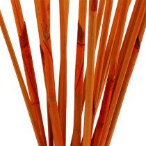 Bastoncini decorativi Elephant Reed Orange 20 pezzi