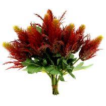 Cardo Rosso-Verde 20 cm 12 pezzi