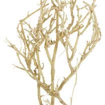 Dry Tree 500g sbiancato