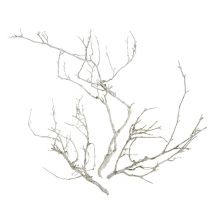 Dry Tree White washed 500g