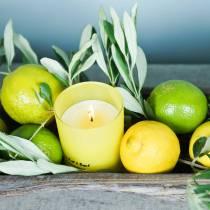 Candela profumata in un vaso Limone e basilico Ø7cm