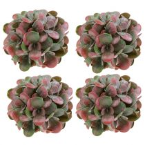 Palline Echeveria Verde, Rosso Ø14cm 4 pezzi