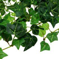 Viticcio di edera verde 70 cm