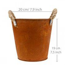 Vaso decorativo con manici, decorazione autunnale, ciotola in metallo acciaio inossidabile Ø20cm H19cm