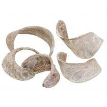 Orecchio di elefante lavato bianco 25 pezzi
