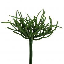 Pick Euforbia Verde 19cm 4 pezzi