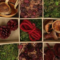 Exotic Mix Craft Kit