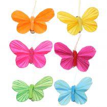 Farfalla piuma su clip colorata 6cm 12 pezzi