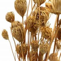 Finocchietto fiori secchi naturali 100g