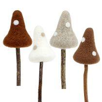 Toadstush funghi fungo marrone specie. 30cm 4 pezzi