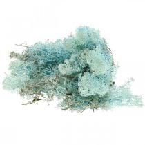 Muschio decorativo muschio azzurro acquamarina renna muschio artigianale 400g