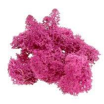 Muschio di renna Rosa Per decorazione e fai da te 400g