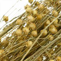 Erbe naturali di lino per floristica secca 100g