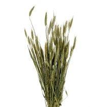 Triticale decorazione del grano come Bund Natur 1bund