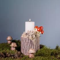 Vaso per piante in legno di olmo Ø11-13cm H11cm
